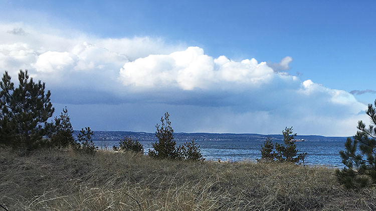 Beach dunes and pine trees with lake and clouds